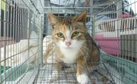 一匹の野良猫さんの不妊手術費用になります