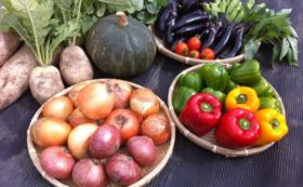 <ReRootsの野菜プレゼント!>仙台市若林区の新鮮野菜詰め合わせ(10点)