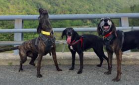 【1頭でも多くの猟犬を救うために!】セントハウンドレスキュー全力応援コース
