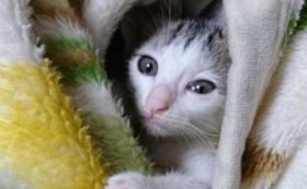 【おすすめ】猫ちゃんたちのオフショットで応援!コースA