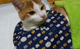 猫ちゃんにご飯を寄付&お食事中動画プレゼントコース