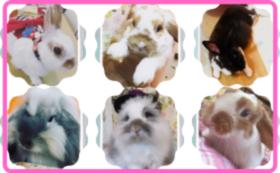 【おすすめ!!】推しうさカレンダー+おやつプレゼント+動画コース