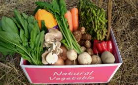 【Organic野菜セット】1箱を購入して千葉の農家さんを応援しよう