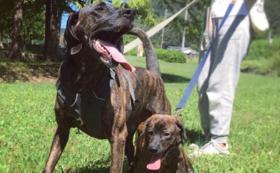 【1頭でも多くの猟犬を救うために!】セントハウンドレスキューオリジナルグッズコース