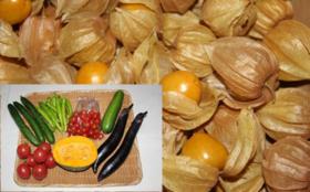 【佐藤夫婦が作った野菜を食べて応援】自然栽培の食用ほおずき400g+自然栽培の夏野菜セット(Mサイズ)+お礼状
