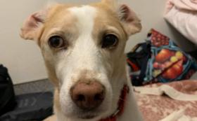 日本聴導犬協会新聞へご芳名の掲載+散歩体験