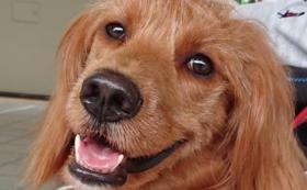 『シニア・サポート犬』の基礎訓練参加権