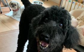 日本聴導犬協会チャリティディナーへご招待