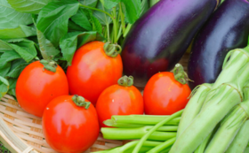 【食べて応援!10人限定】野菜5種類詰め合わせ定期便3ヶ月コース