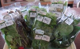 有機野菜お届けコース|旬の有機野菜3種類セット
