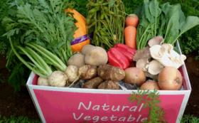 【Organic野菜セット】3箱を購入して千葉の農家さんを応援しよう