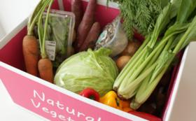 【Organic野菜セット】6箱を購入して千葉の農家さんを応援しよう