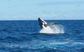 <リターン不要の方向け>Sea Cam Science Pacific と新田を全力応援!