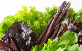 有機野菜お届けコース|有機紫アスパラ(特大)+旬の有機野菜8種類セット