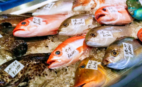 【未来の船長応援+釣り吉仲間コース!】石垣島からの手紙と海産物