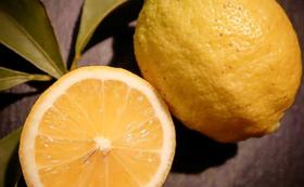 お礼の瀬戸田産レモンコース