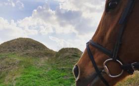【オススメ!】トレッキング券(世界遺産コース)×1とマクラメの馬用ホルター