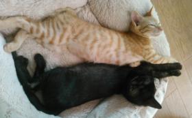 保護した猫たちの可愛い写真付きお手紙コース