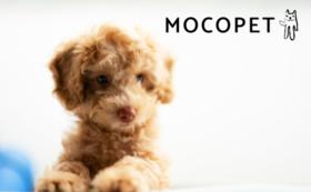 【あなたのペットがモデル犬・モデル猫に!】モコペット商品モデルコース