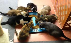ご支援保護猫たちへのおやつコース