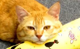 保護猫ご支援コース