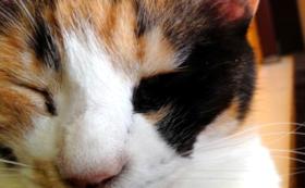 ご支援保護猫カフェ30分延長コース