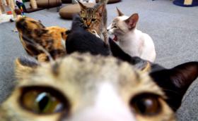 ご支援保護猫カフェ1時間コース
