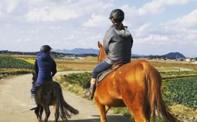 【ペアでお得!】トレッキング券(世界遺産コース)×2とマクラメで編む馬用ホルター