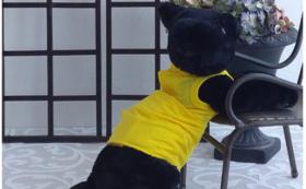 猫の介護服「ケアテクト」コース