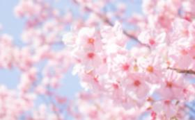 桜の木を育てよう!