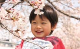 今ある桜をささえる桜の木の育成オーナーに
