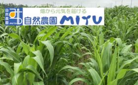 MITU応援コース