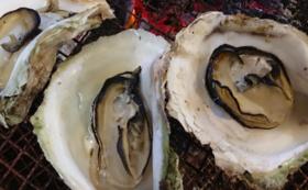 海の調味料セット+一夜干し+旬の岩牡蠣