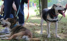 愛犬と一緒に!しつけトレーニング交流会コース