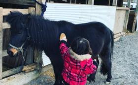 あんらいえんホースの馬をお世話してください!