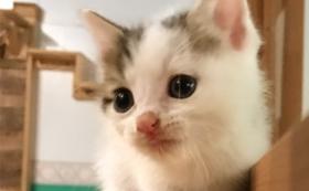 【返礼品不要】保護猫応援コース