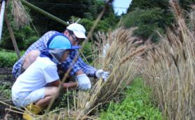 【生き物育む畑の恵みコース】サシバの里で作った無農薬うどんをお届け!