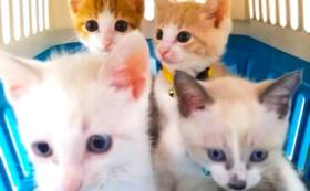 【かぎしっぽサポーター】猫40匹分の避妊・去勢手術代になります