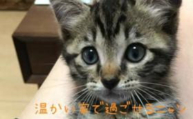 杏ちゃん全力サポートコース