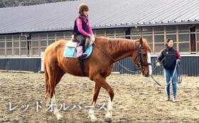 筑波スカイラインスティーブルの馬たちとのふれあい(引き馬体験)
