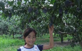 野菜や果樹の収穫体験へご招待します。