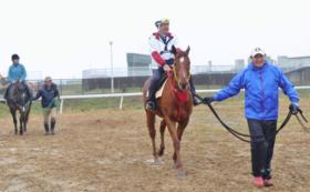 【相馬野馬追を体験】北郷騎馬会で乗馬体験(2名様)