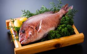 【堪能プランその1】津本式白寿真鯛1尾(0.8~1kg)お届けプラン!自宅で調理可能サイズ!