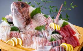 【たっぷり堪能プラン!】津本式白寿真鯛1尾(2~2.5kg)お届けプラン