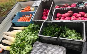【限定10セット】ずだらっと農園野菜を堪能コース