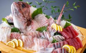 【わいわい堪能プラン!】津本式白寿真鯛4尾(2~2.5kg/尾)お届けプラン