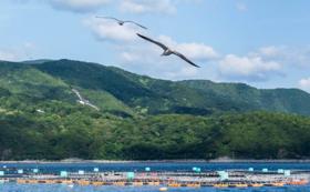 【釣りが生き甲斐なあなたへ!】赤坂水産養殖現場で釣りフリーパス
