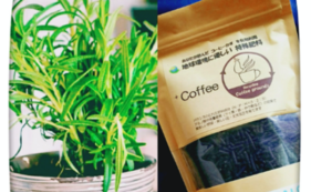 +Coffeeとハーブ苗のセット