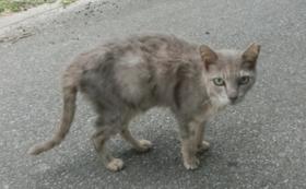 石垣島の猫たちへの応援コース