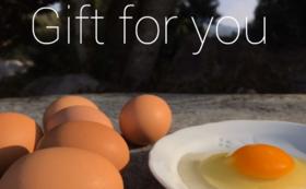 平飼いの濃厚卵をお楽しみコース